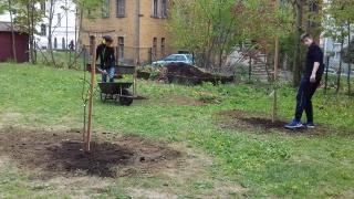 Nové stromky v zahradní učebně